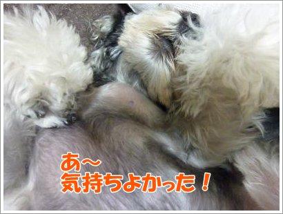 10_25+008_convert_20111025083536.jpg