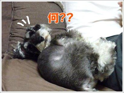 10_25+010_convert_20111025083657.jpg