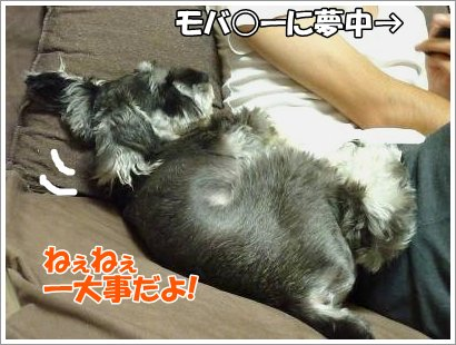 10_25+013_convert_20111025083721.jpg