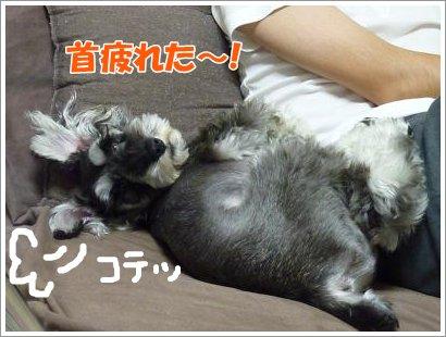 10_25+015_convert_20111025083751.jpg