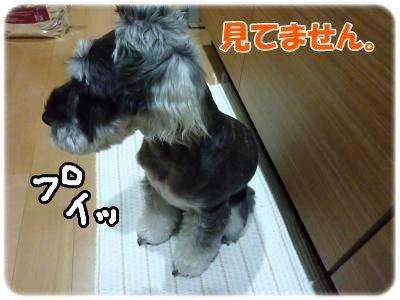 10_26+006_convert_20111025220824.jpg