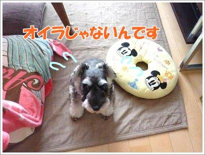 10_27+006_convert_20111027093016.jpg