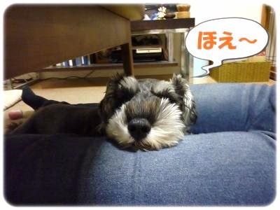 10_29+006_convert_20111029110440.jpg