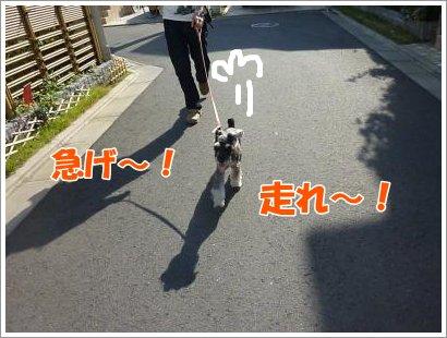10_30+026_convert_20111030095414.jpg