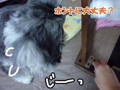 10_8+007_convert_20111008133649.jpg