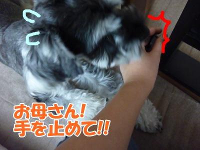 10_8+010_convert_20111008133753.jpg