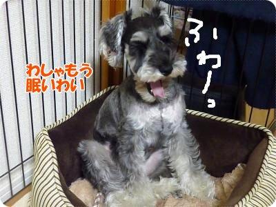 11_12+005_convert_20111112095327.jpg