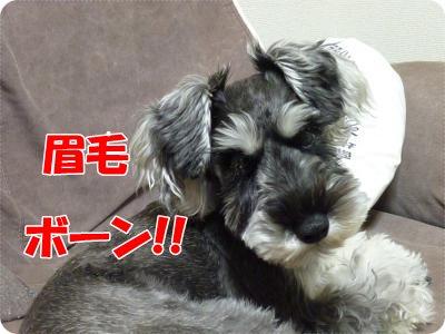 11_12+025_convert_20111112101527.jpg