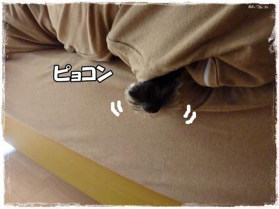 11_12+031_convert_20111113100905.jpg