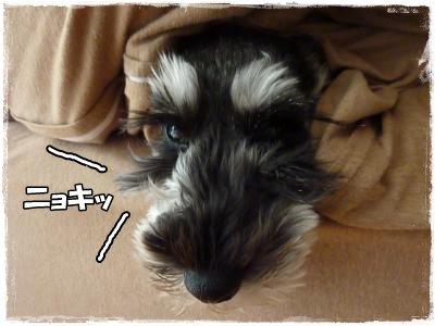 11_12+037_convert_20111113100946.jpg