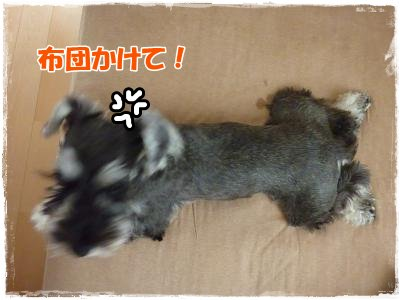 11_12+071_convert_20111113101347.jpg