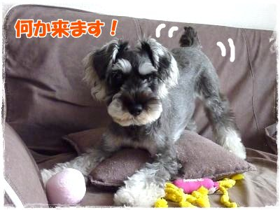 11_13+005_convert_20111113095423.jpg