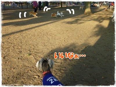 11_14+040_convert_20111115091238.jpg