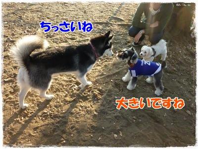 11_14+058_convert_20111115091404.jpg