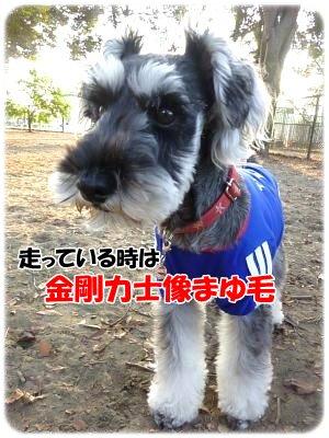 11_14+063_convert_20111114121131.jpg