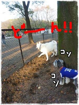 11_14+071_convert_20111115091600.jpg