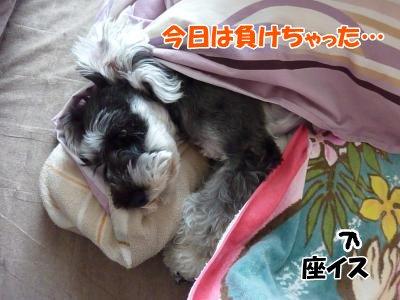 11_16+002_convert_20111116122314.jpg