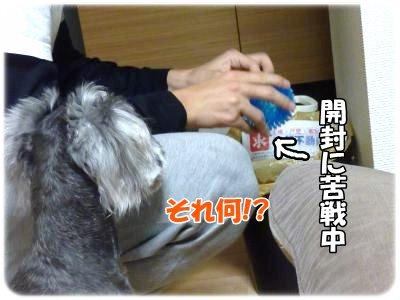 11_3+022_convert_20111103102158.jpg