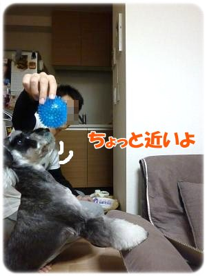 11_3+024_convert_20111103102221.jpg