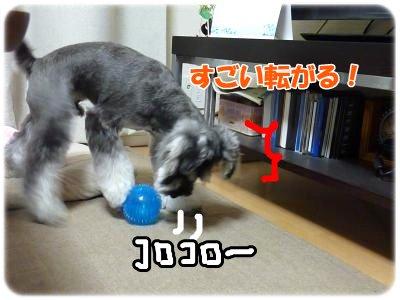 11_3+038_convert_20111103102437.jpg