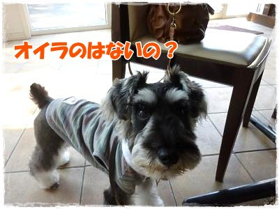 11_5+100_convert_20111106121614.jpg
