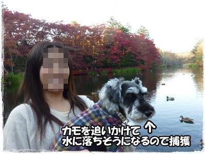 11_5+276_convert_20111107092305.jpg
