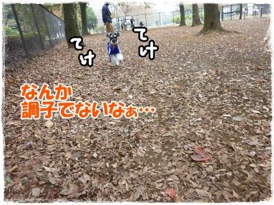 11_8+081_convert_20111110085722.jpg