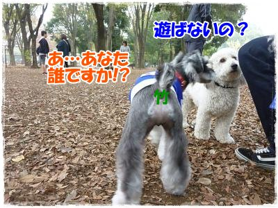 11_8+094_convert_20111110090007.jpg