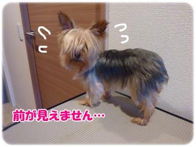 11_8+142_convert_20111108184018.jpg