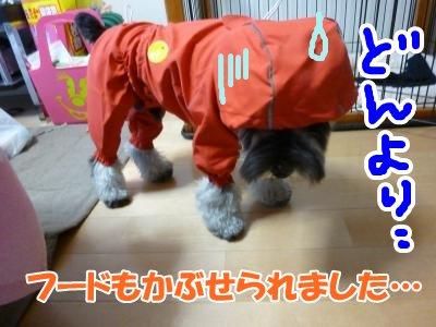 290_convert_20111005085125.jpg
