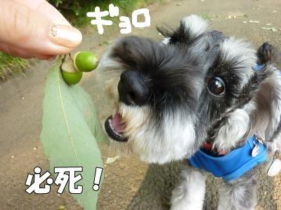 9_10+025_convert_20110918092057.jpg