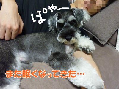 9_12+001_convert_20110914120008.jpg