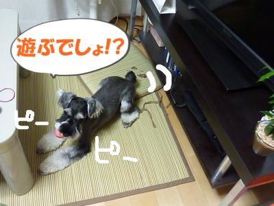 9_14+009_convert_20110914120100.jpg