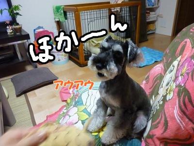 9_15+006_convert_20110916090021.jpg
