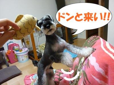 9_15+013_convert_20110916090249.jpg