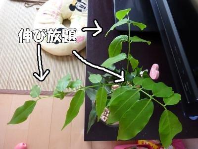 9_15+042_convert_20110915095749.jpg