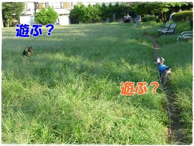 9_19+104_convert_20110920112224.jpg