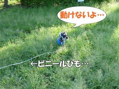 9_19+109_convert_20110919174515.jpg