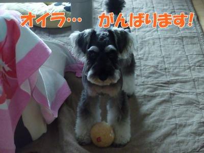 9_20+016_convert_20110920112630.jpg