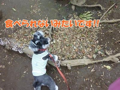 9_27+015_convert_20110927094939.jpg