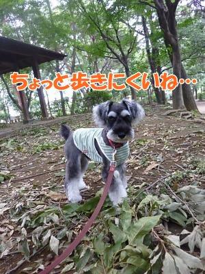 9_27+024_convert_20110927095059.jpg