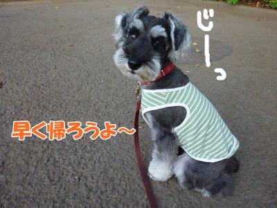 9_29+003_convert_20110929091641.jpg