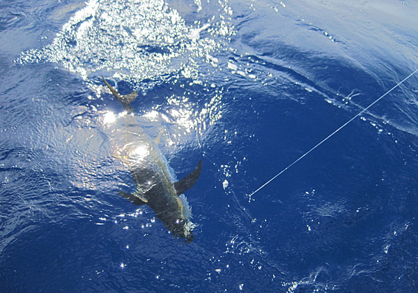 沖縄へ釣りに行ってきました