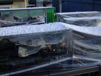 2階遮る物のない凍りやすいベランダ・・・かる~い雪景色・2度目(東京南部)2013.01.28