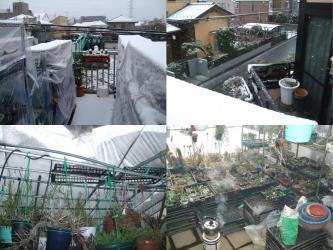 関東地方またもや雪景色・・・暖かい日が続いていたのに・・・ビニールハウス練炭火鉢つけてます(´ヘ`;)2013.02.06