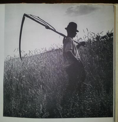 『ハンガリヤ』麦刈りの帰り