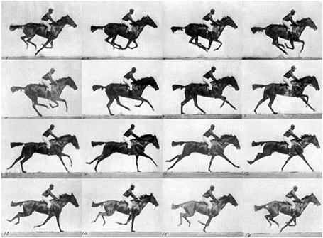 Eadweard Muybridge 'Animal Locomotion' c.1887