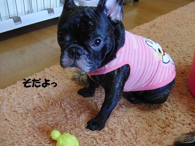 2011.9.29 072立派になったふく(字)
