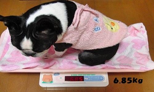 2011.9.29 045たま体重測定6.85kg