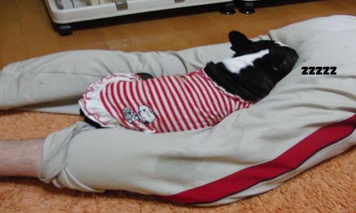 たまの寝床 おケツ